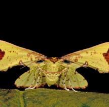 Moth-at-Coorg---Yuwaraj-Gurjar