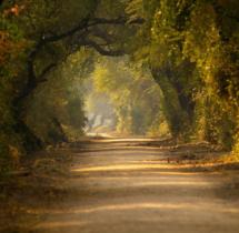 Yuwaraj_Landscape-04
