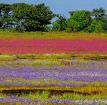 Yuwaraj_Landscape-10