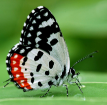 001-Red-Pierrot---Yuwaraj-Gurjar